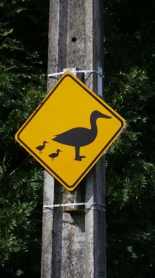 """panneau de circulation attention """"duck"""" peuvent traverser la route , à Marton"""