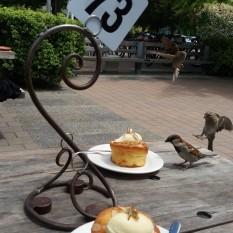 terrasse à Wanaka (oiseaux omniprésents en nz)